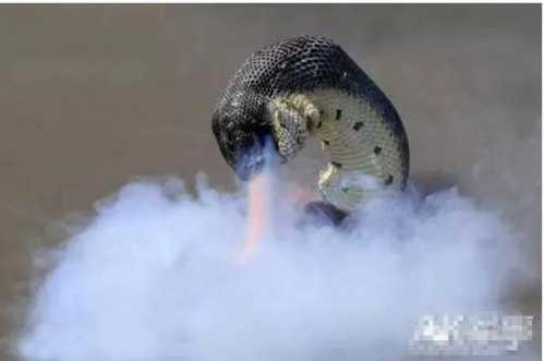 大蟒蛇事件 揭开安徽巨蟒渡劫事件真相