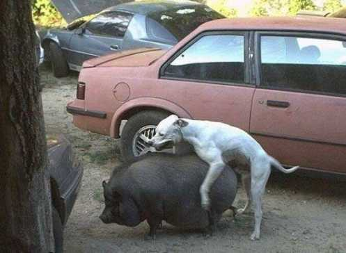 少妇乱伦和狗_盘点动物搞笑性行:猴子群交与猫乱伦(图)
