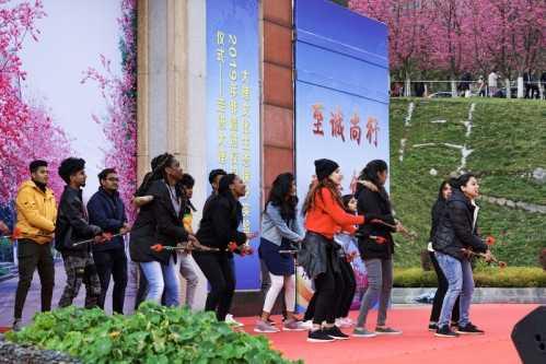 中国最浪漫的校园收藏了大理最美的春天 大理春樱花