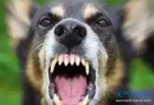 晚上做梦梦到被狗咬是什么意思 晚上做梦梦见狗