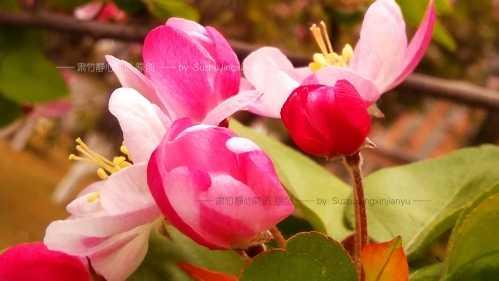 我们错过了花的美丽 花后是什么花
