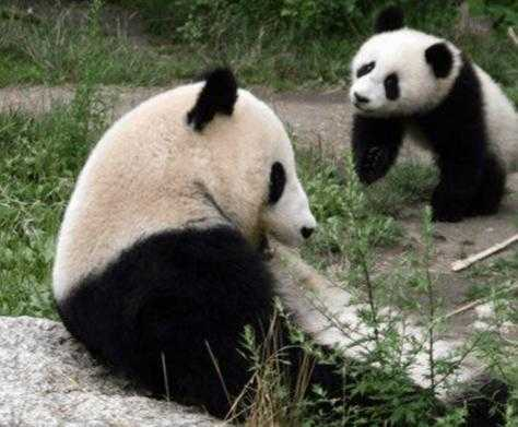 世界十大濒临灭绝的珍稀动物排行榜 世界珍稀动物
