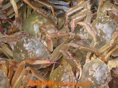 活螃蟹如何让它保活 活螃蟹怎么处理