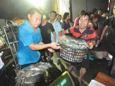 大闸蟹的活体运输是怎么完成的 大闸蟹怎么运