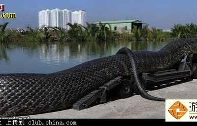 最大的蛇500米- 100米蟒蛇图片