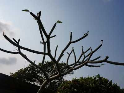 我们来了——占婆岛 岘港的旅游占婆岛