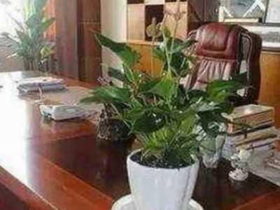 办公室植物摆放风水有那些禁忌 办公室摆放植物风水