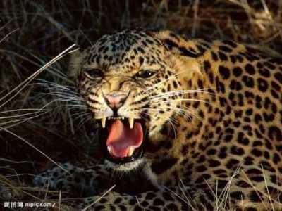 盘点19个杀人最多的动物排行榜 杀什么动物吓什么动物