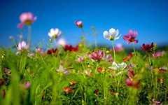 春天的景色作文250字 春天的美景作文250
